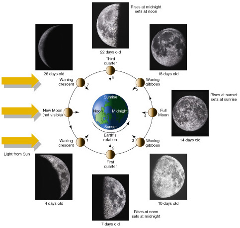 moon phases in order. 8 moon phases in order.